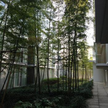 竹やぶの中庭
