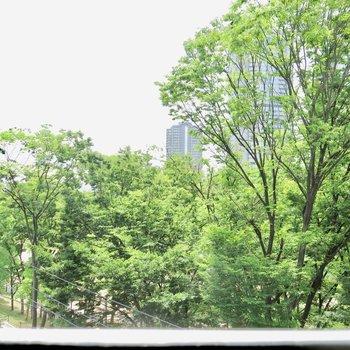 新緑の季節※写真は同間取り別部屋のものです。