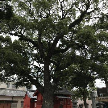 くすの木に抱かれて