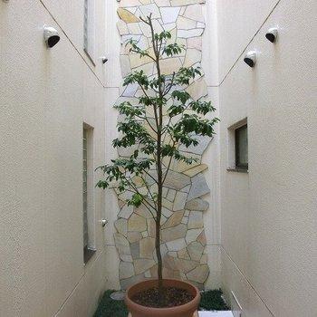 共用部の木も素敵。※写真は前回募集時のものです