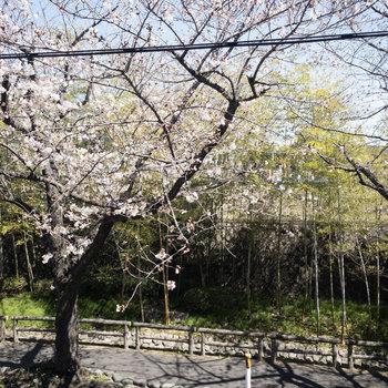 バルコニーからの眺望です。春が待ち遠しくなる景色ですね。