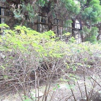 半地下なので、日当たりは微妙ですが、木々に癒されるのもいいよね。※前回募集時の写真です