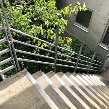 中庭に緑があって癒されます〜。※前回募集時の写真