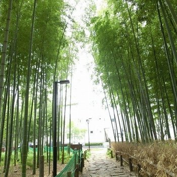 美しい竹林の道を抜けて。