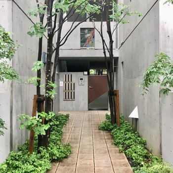 緑あふれる玄関前のアプローチ。