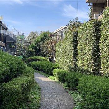 自転車の通行はできない緑道でのんびり駅まで歩いて行けます。