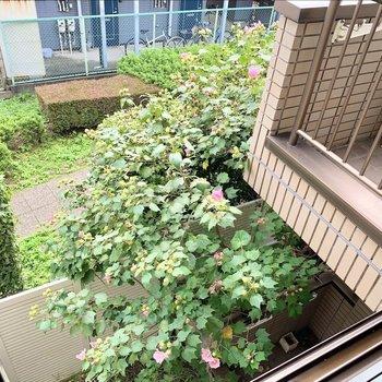 窓からも、ピンクのお花ときれいな緑道の風景に癒されます。