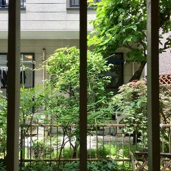 共用部に面している北側の窓は鉄柵付きで安心。緑が良いですね〜