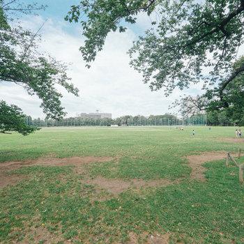 武蔵野中央公園もすぐご近所です。ピクニックに行きましょう。