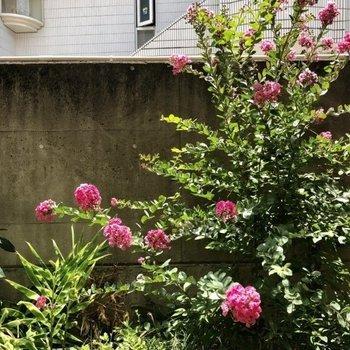 眺望は壁とお花。