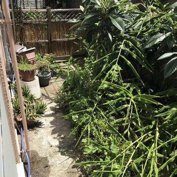 お庭があります!洗濯物も外で干せますよ。