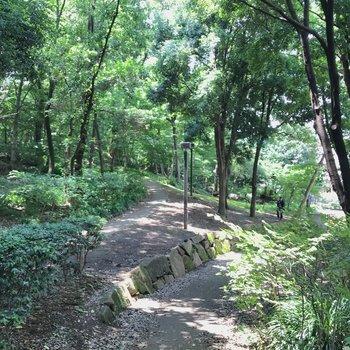 目の前にあった都立林試の森公園