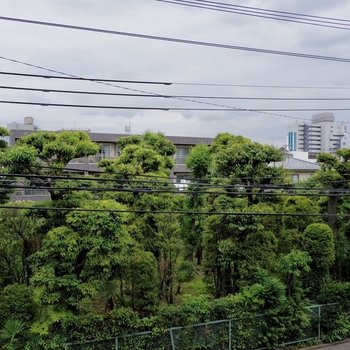 バルコニーから緑が。