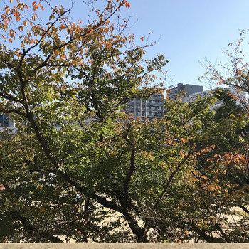公園では紅葉しておりました♡