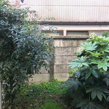 眺望は塀の向こうにおとなりさん。