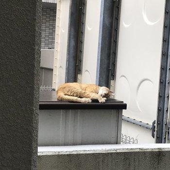奥には猫ちゃんがお昼寝してました♬