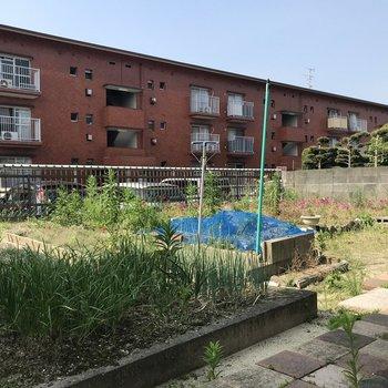 たっぷり広いお庭!ガーデニングや家庭菜園を楽しめますよ。