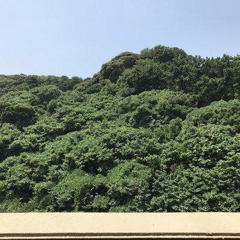 バルコニーからは一面の緑ビュー!マイナスイオン浴びましょう◎