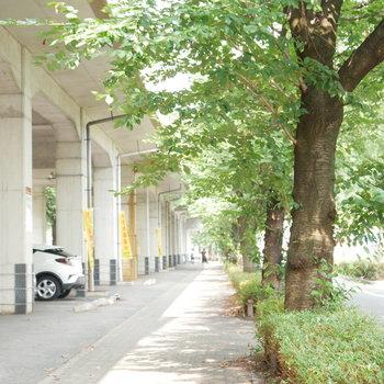 尼ケ坂駅への街路樹のある道