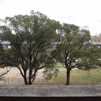 お家の裏は東領公園。緑が見えて気持ちいい〜(※写真は3階のお部屋からの眺望です)