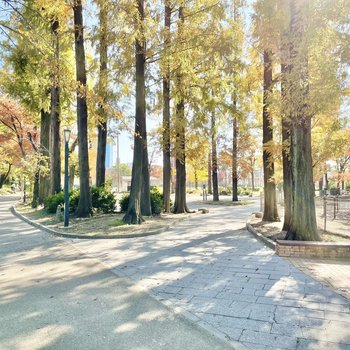 お部屋の近くにはランニングもできる公園が。