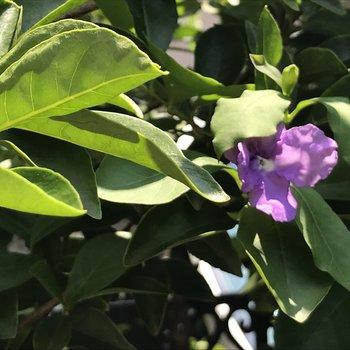 しおれてるけど、咲いていたきれいな花