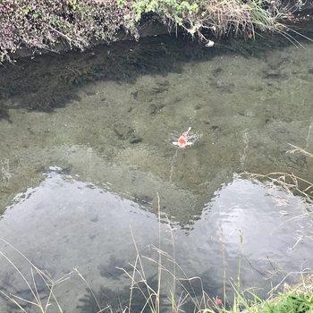 近くの川には錦鯉が・・・!餌やりしたい。