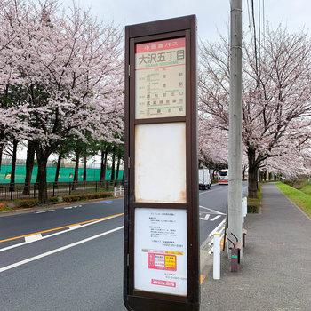 最寄りのバス停です。桜並木がキレイ。
