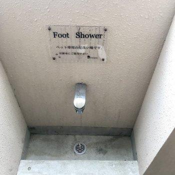 なんとフロアにペット専用足洗い場がついていました!
