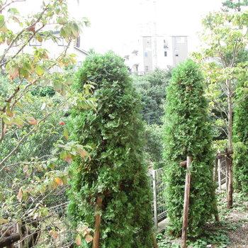 中庭はたくさんの木々。
