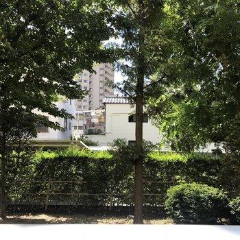 マンションのお庭の風景 こんなに近いのは1階の特権◎