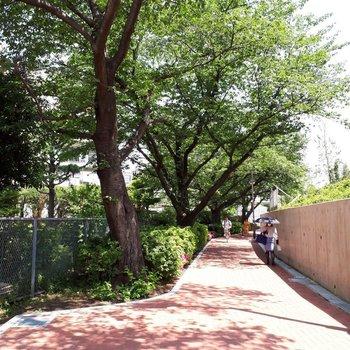 駅からの道は一部整備されてとっても歩きやすいのです