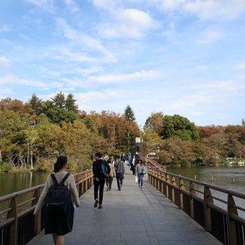 駅までの行き帰りは井の頭公園を抜けて四季の移ろい感じて。