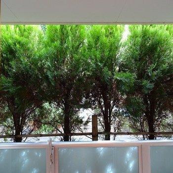 窓の外は木でおおわれています。※写真は同じ間取りの105号室のものです