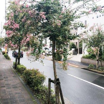 街路樹に癒されるの