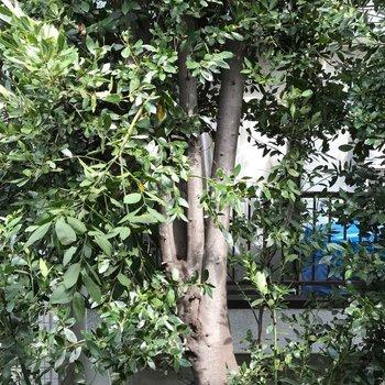 LDKからの眺望。隣の建物との間に木があるので視線をカット