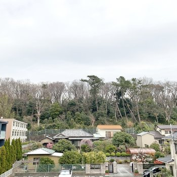 眺望は駐車場と動物公園の木々でした。
