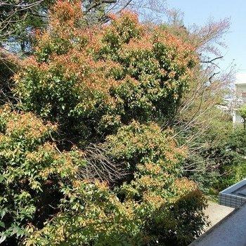 外には緑が生い茂っています※写真は307の同間取りのもの