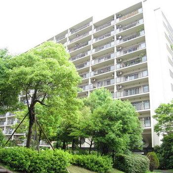 のむら貝塚ガーデンシティ7番館