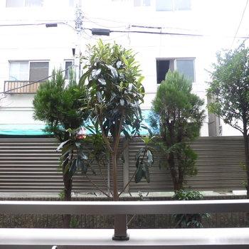 植木と柵で外からの目は気になりません◎