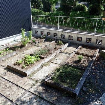 専有菜園もあります。