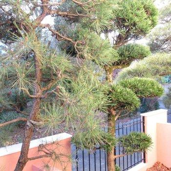目の前は松の木で和のような雰囲気に◎