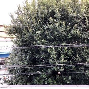 目の前に緑の葉っぱが生い茂った木があります。