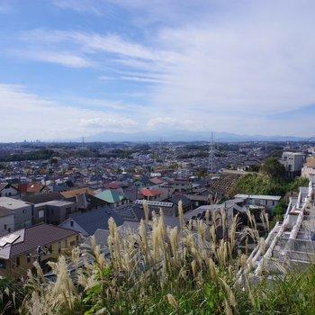 丘の上にあったすすき。そして街と青空