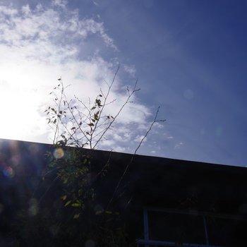 上を見上げると、朝日