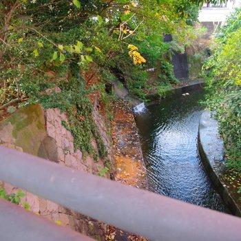 静かに流れる五反田川の支流