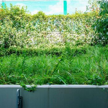 緑が萌える眺望です。※写真は1階の反転間取り別部屋のものです。