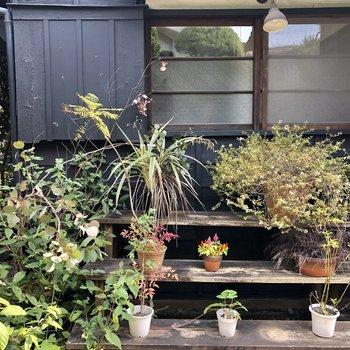 自分の好きな植物を置けますよ〜。