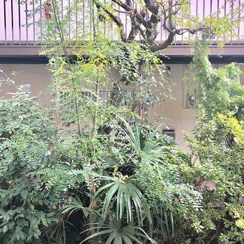 バルコニーからの眺望です。木が生い茂ってますね