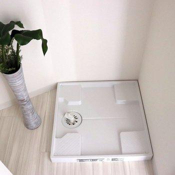 洗濯機置場の横に植物もいいですね
